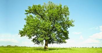 Kartenbedeutung der Lenormandkarte Baum