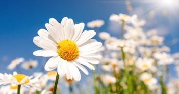 Kartenbedeutung der Lenormandkarte Blumen