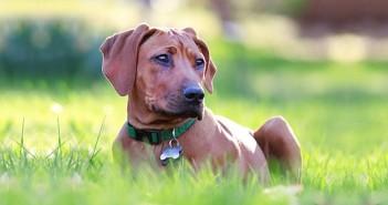 Kartenbedeutung der Lenormandkarte Hund