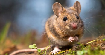 Kartenbedeutung der Lenormandkarte Mäuse