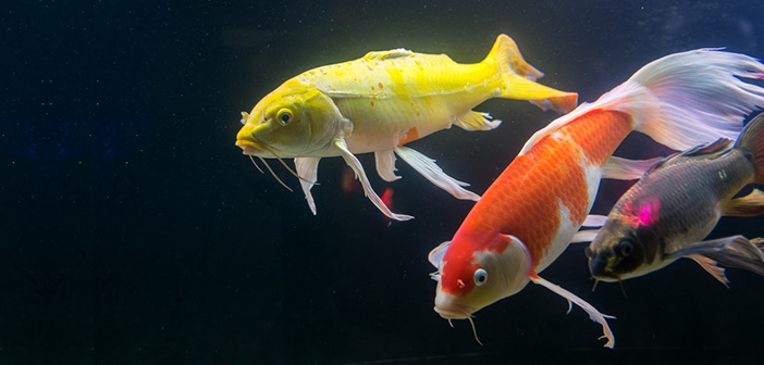 Kartenbedeutung der Lenormandkarte Fische