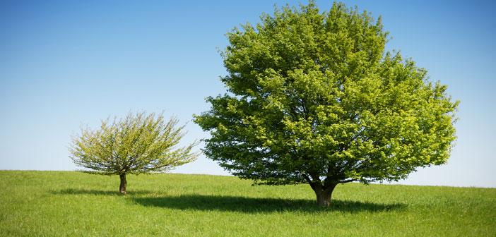 Lenormand Kombinationen mit der Karte Baum
