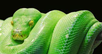 Lenormand Kombination Schlange