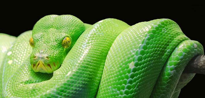 Lenormand Kombinationen mit der Karte Schlange