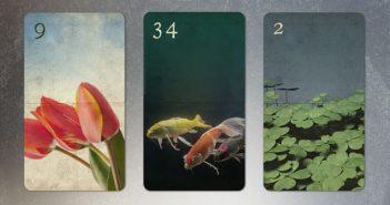 Kombination Blumen Fische Klee