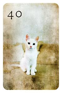 Karte 40 - die Katze