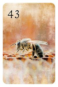 43 - die Biene