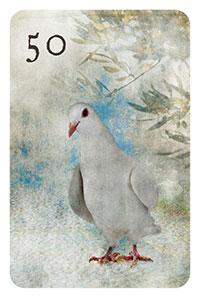 50 - die Taube