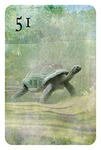 51 - die Schildkröte