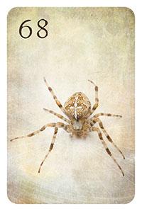 68 - die Spinne